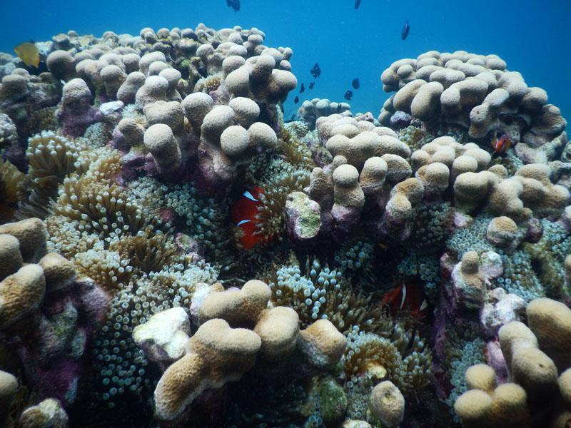 pemandangan bawah laut gili kondo